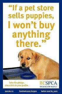 Pin By Fawn Johnson On Animal Rights Puppies Puppy Mills Pet Store