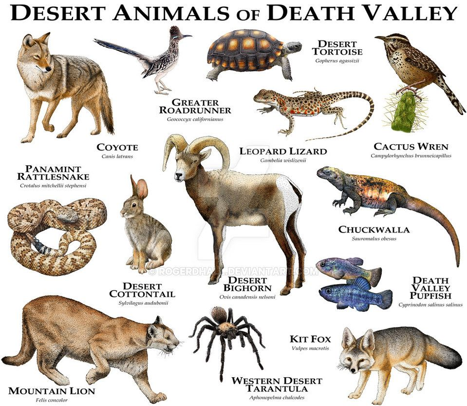 Fine art illustration of some of the unique animals native