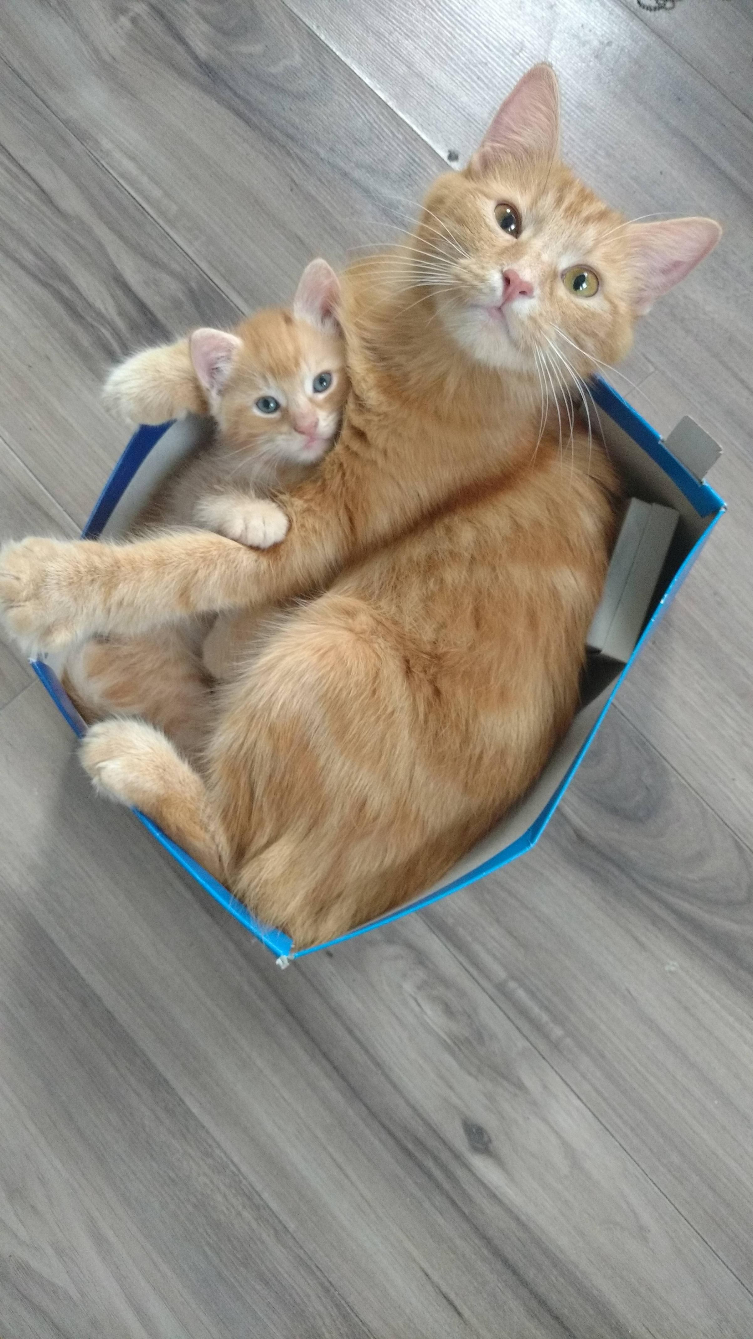 Just Woke Up To These Two Mother And Son Imgur Do You Suppose You Could Locate A Slightly Larger Box Please Cute Cats Cats Kittens
