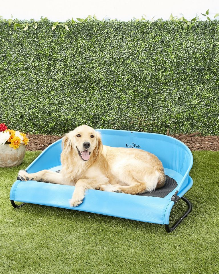 Your Dog Needs One Of These Genius Cooling Beds Cool Dog Beds Elevated Dog Bed Orthopedic Dog Bed