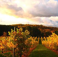 Willow Vineyards L Wine Tasting L Suttons Bay L Traverse City L Michigan Vineyard Suttons Bay Traverse City