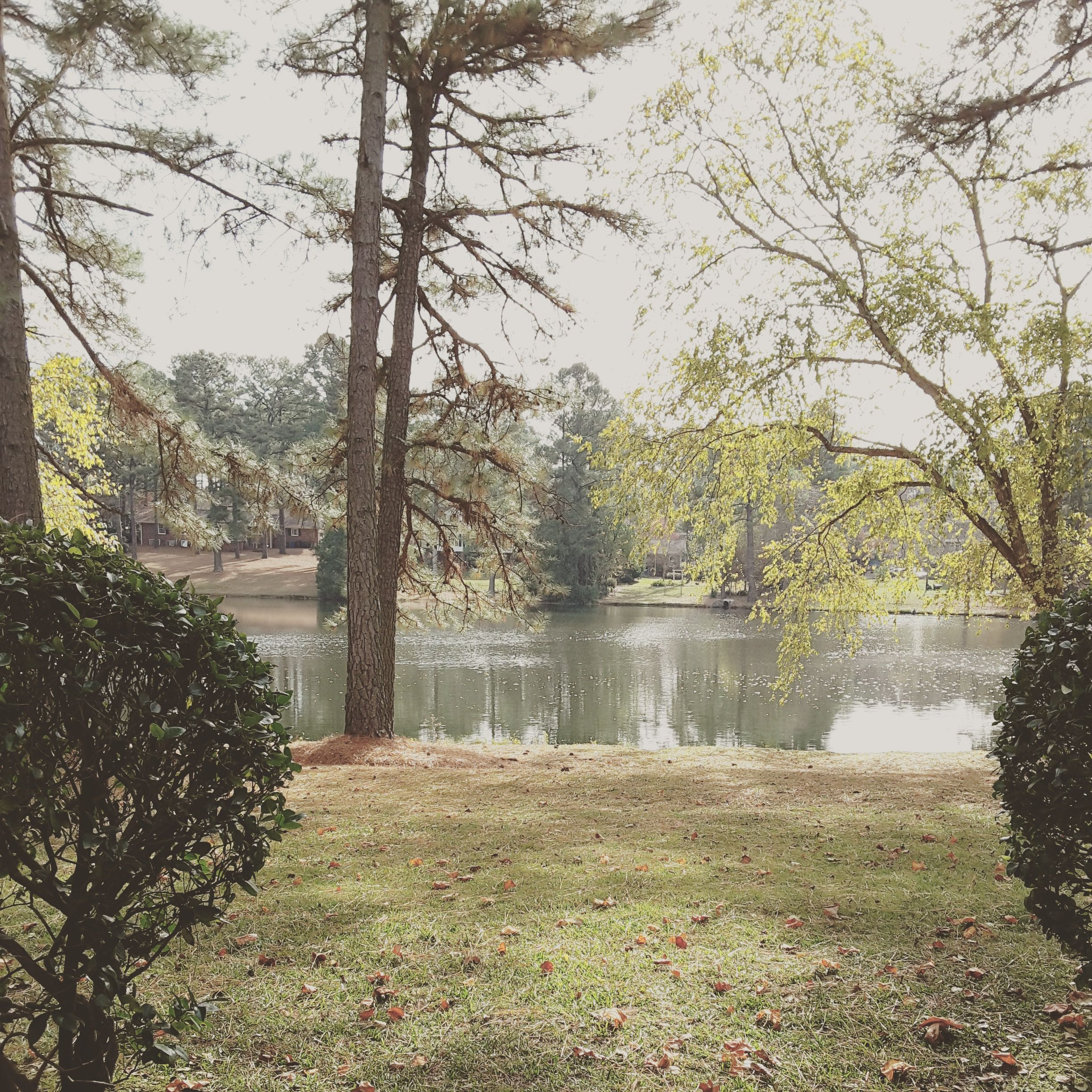 Country Lake Apartments: The View From Our Lakeside Apartments