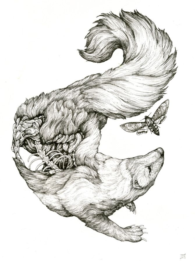 Exploring cosmology through intricate drawings of animals by Lauren ...
