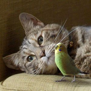 Cat & Budgie - made me smile - click and watch