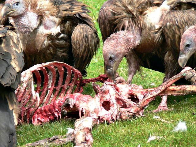 Link #38: Tibetans Leave Their Dead to Nature and Animals - Fun Facts for Kids