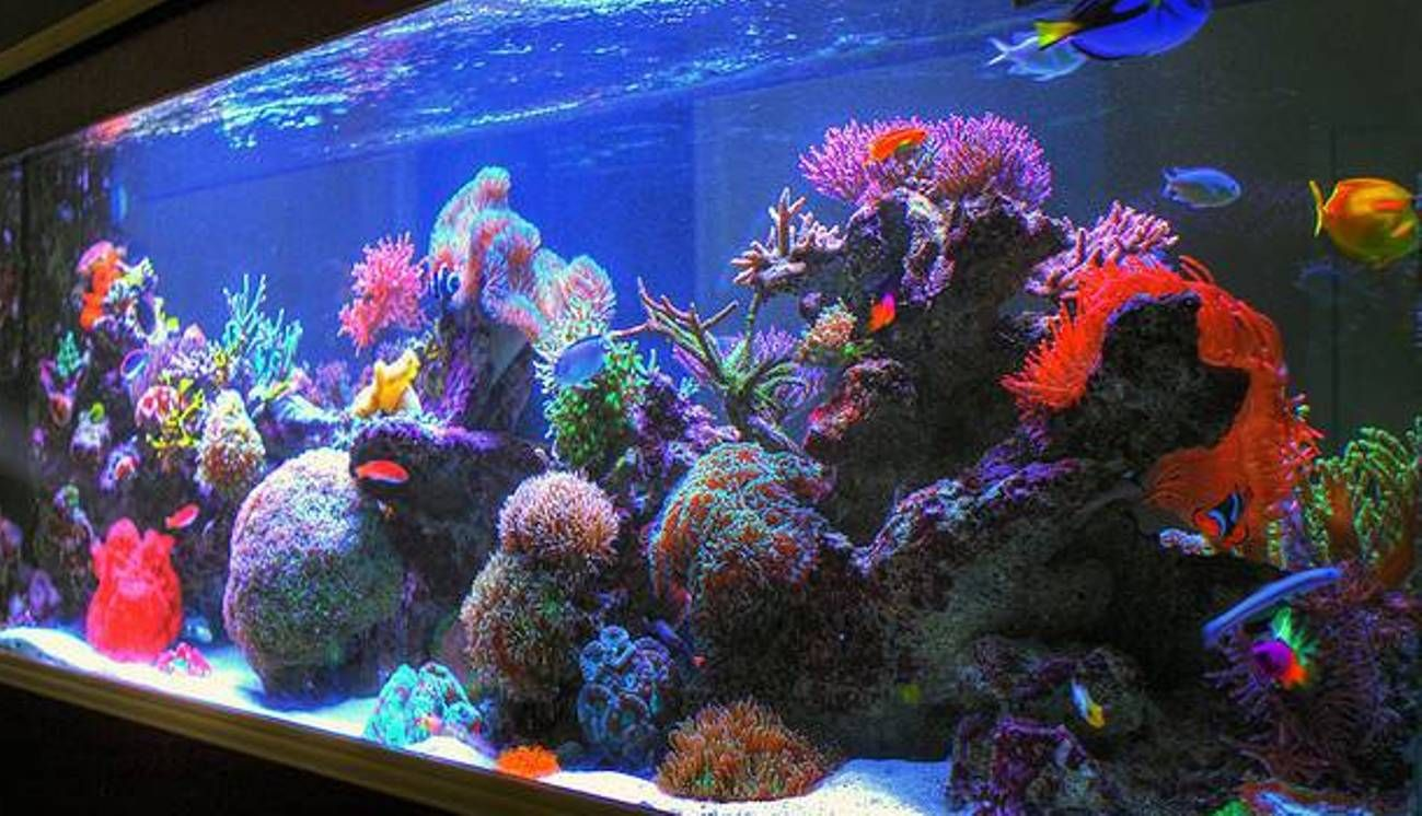 Good Fish Tank Decoration Ideas | Fish tank decoration ideas, Fish ...