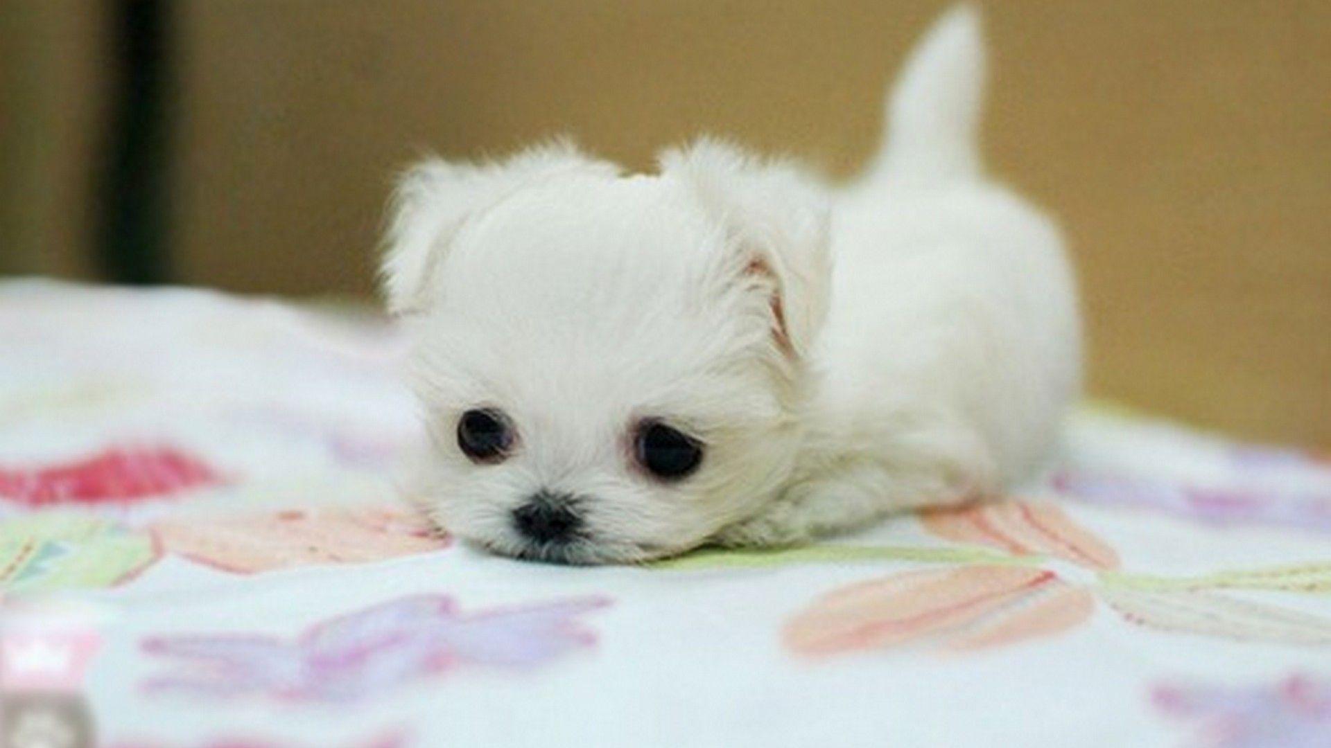 Wallpaper Puppies Puppies
