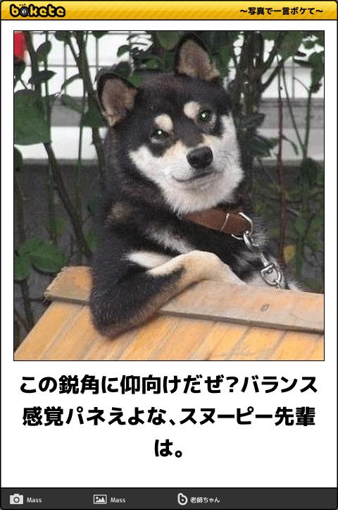 この鋭角に仰向けだぜ バランス感覚パネえよな スヌーピー先輩は 犬 画像 可愛い犬 動物 おもしろ