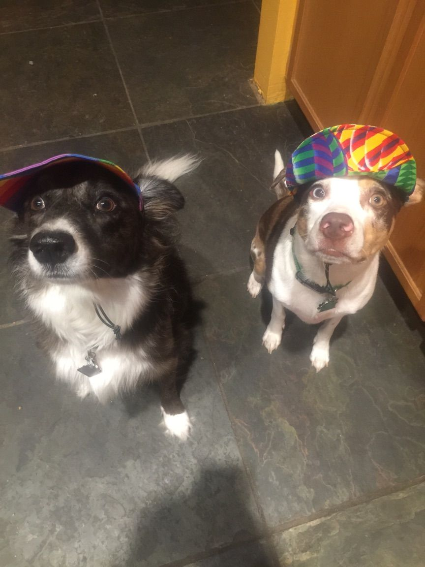 Repping The New Puppy Hats In Tampa Fl Border Collie And
