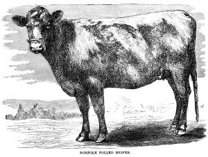 Black And White Clip Art Vintage Cow Clipart Farm Animal Illustration Engraving