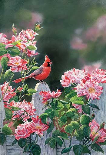Garden gateway cardinal by susan bourdet art birds for Garden gateway