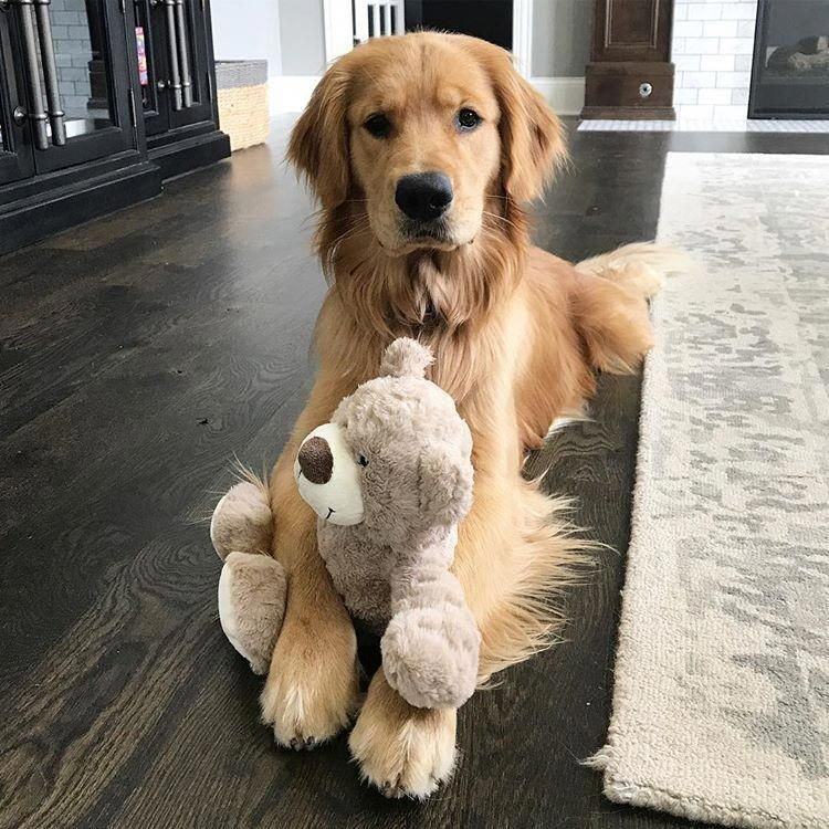Find Out More Information On Golden Retriever Puppy Look At Our