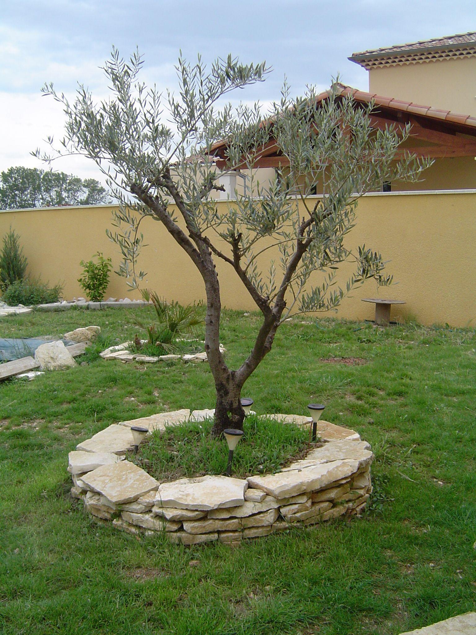 Bordure autour d 39 un arbre recherche google jardin for Arbre exterieur jardin