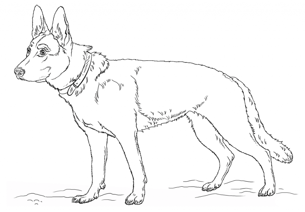 German Shepherd Coloring Pages Best Coloring Pages For Kids Dog Coloring Page German Shepherd Dogs Puppy Coloring Pages