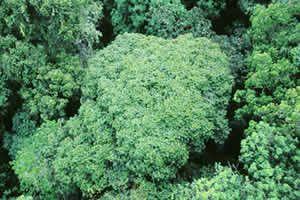 Rainforests - the Smithsonian & Rainforests - the Smithsonian | TEXT 2427 CT - u0027Desaturatedu0027 | Pinterest