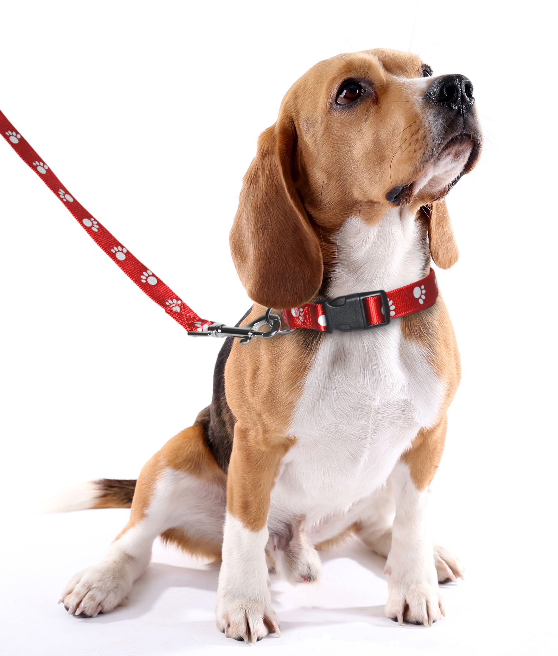 Collar and leash set 2 day sale 623 15 to 62715 grab