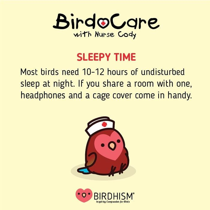 Sleep is important for birds as well as yourself. If you share a room with them, cage covers and he