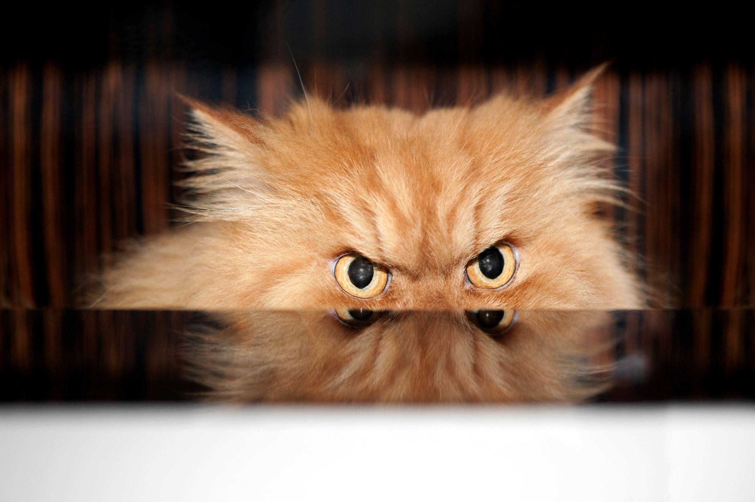 Картинки, злой кот прикольная картинка