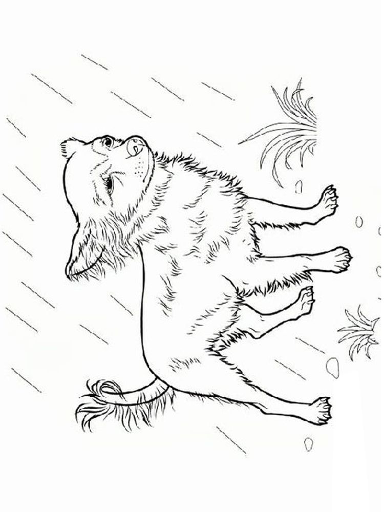 31+ Chihuahua dog coloring pages information