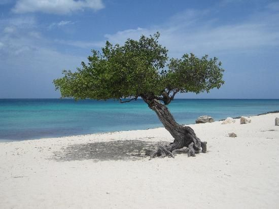 Palm Eagle Beach Aruba One Of A Pair