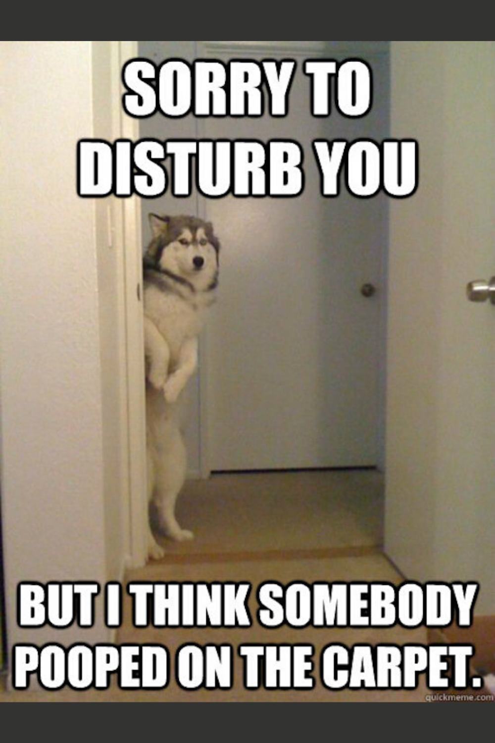 Sorry To Disturb You But I Think Somebody Pooped In The Carpet Bad Dreams Funny Dog Memes Dog Cages