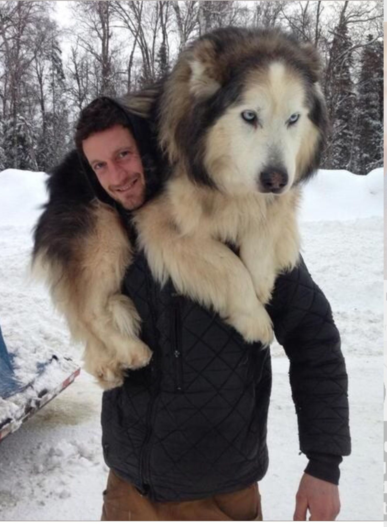 Pin by Alyssa Lautner on Screenshots Fluffy dogs, Dogs