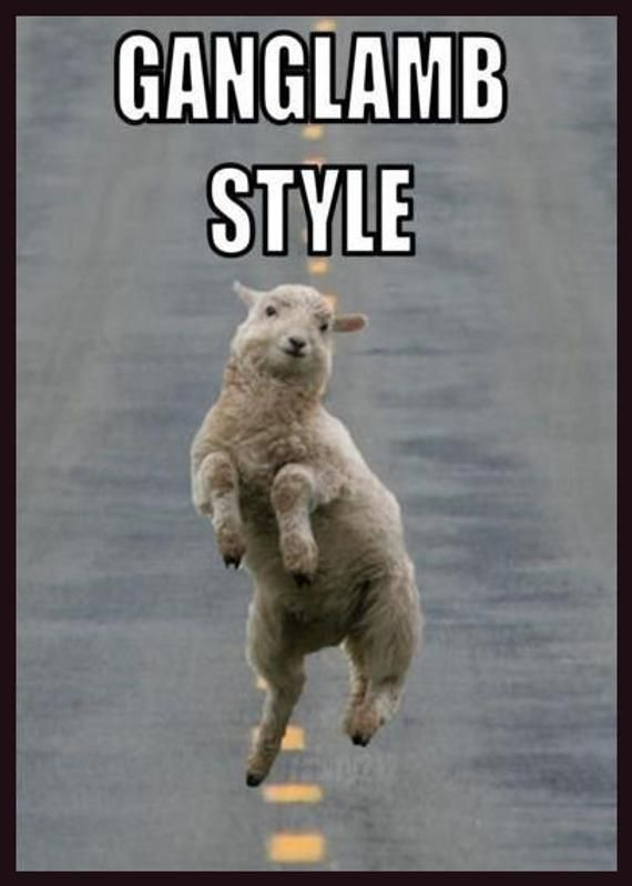 Men's Ladies T SHIRT spoof comedy music Ganglamb Style dance sheep lamb #animalcaptions