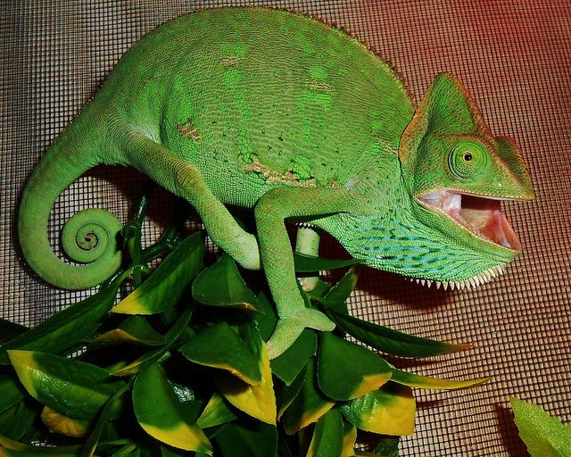 Yippee! It's almost time for Reptile Rally! (June 15th from 12pm-4pm