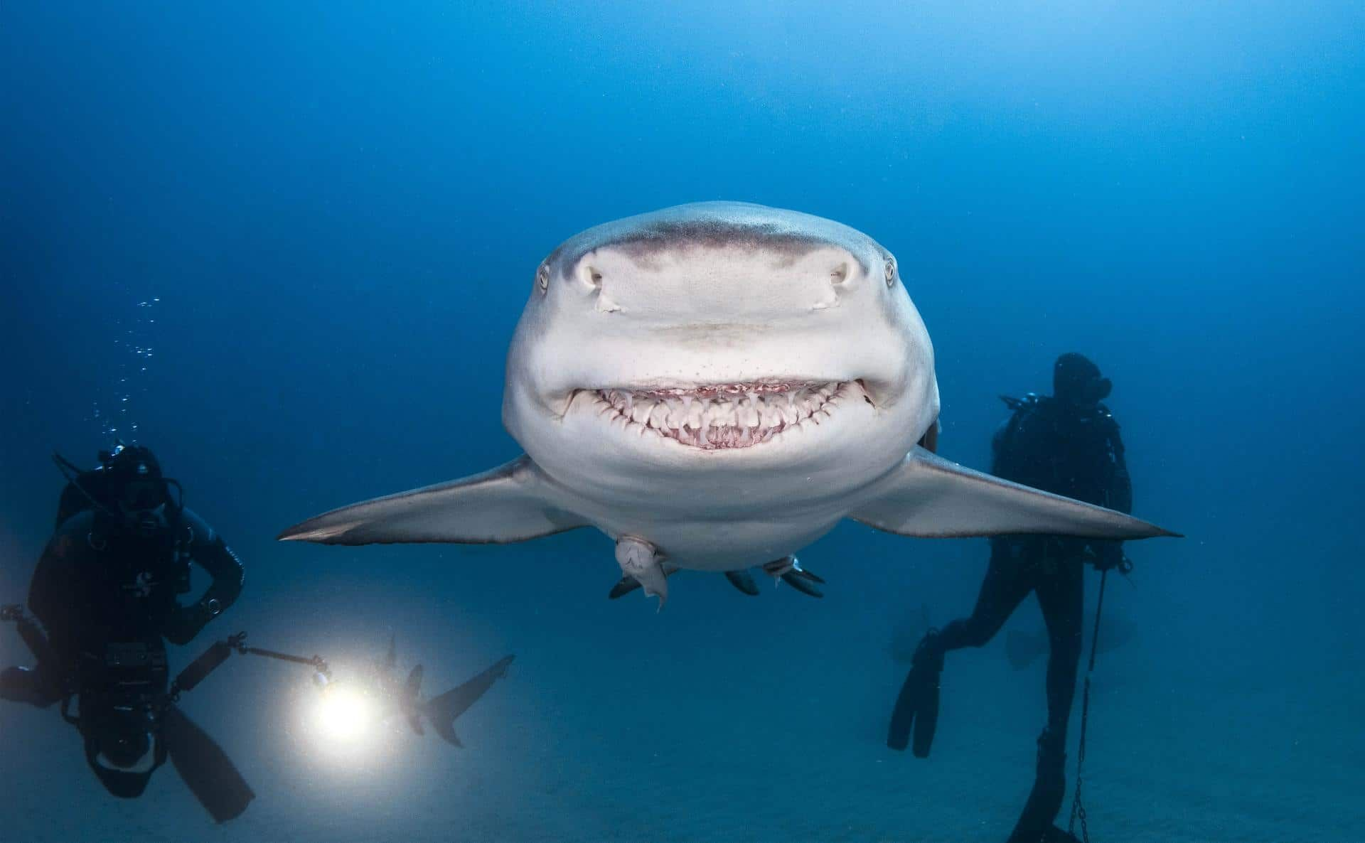 акула прикол картинка первом случае, техника