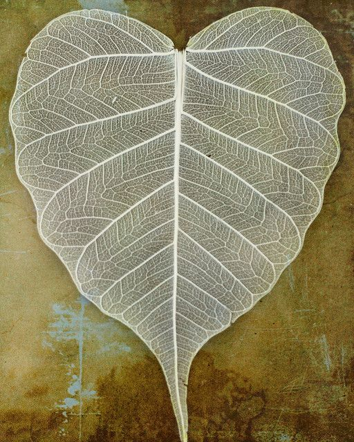 lace leaf By K.Young Photography