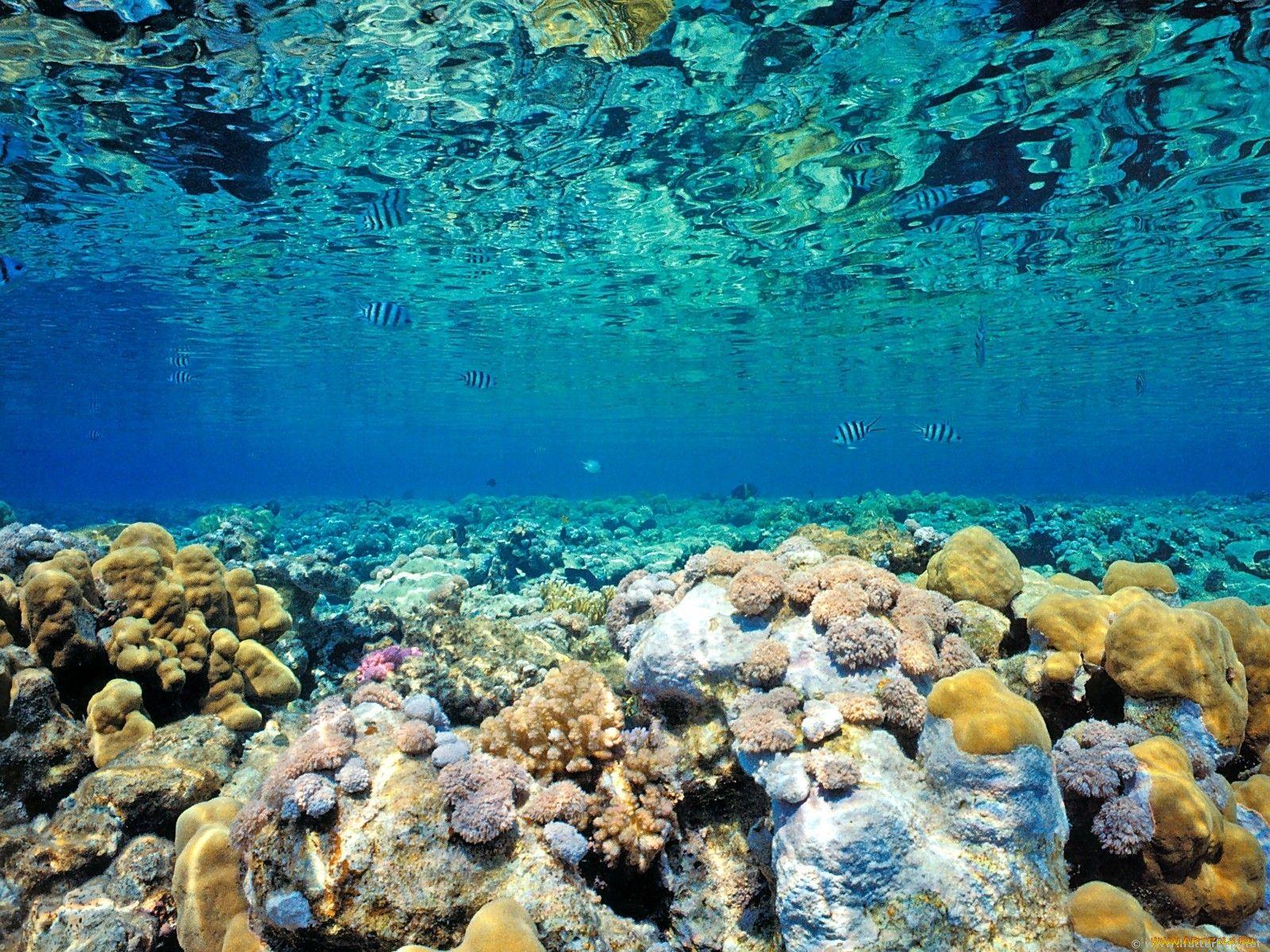 Дно моря картинки
