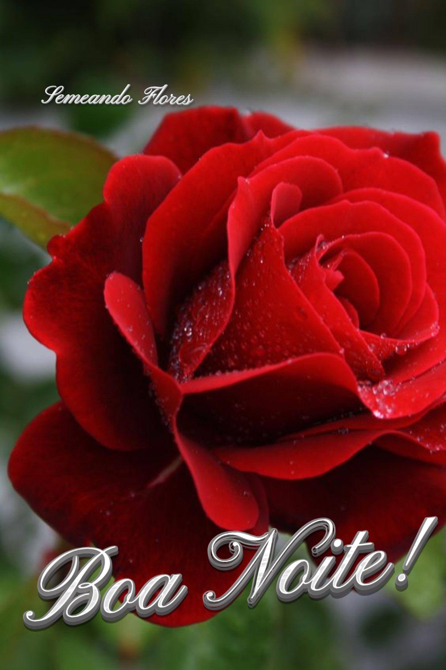 Pin De Thelma Morais Em Boa Noite Rosas Vermelhas Rosas Bela Rosa