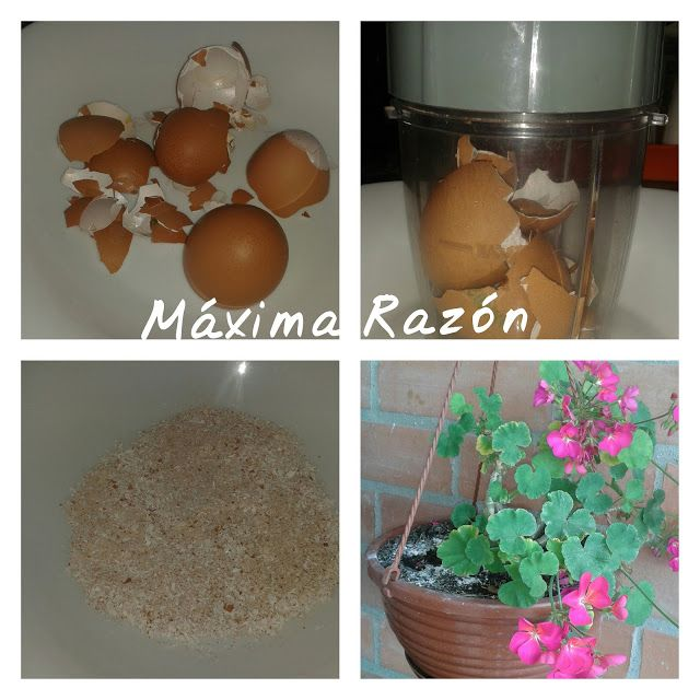 razn ecolgica abono de huevo para mis plantas