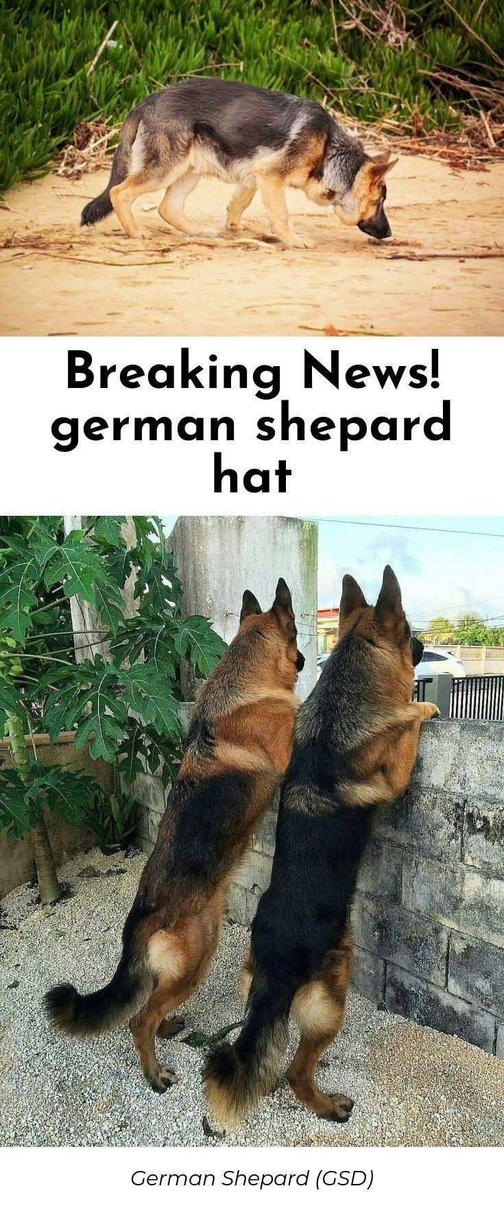 Pin On The German Shepard Dog