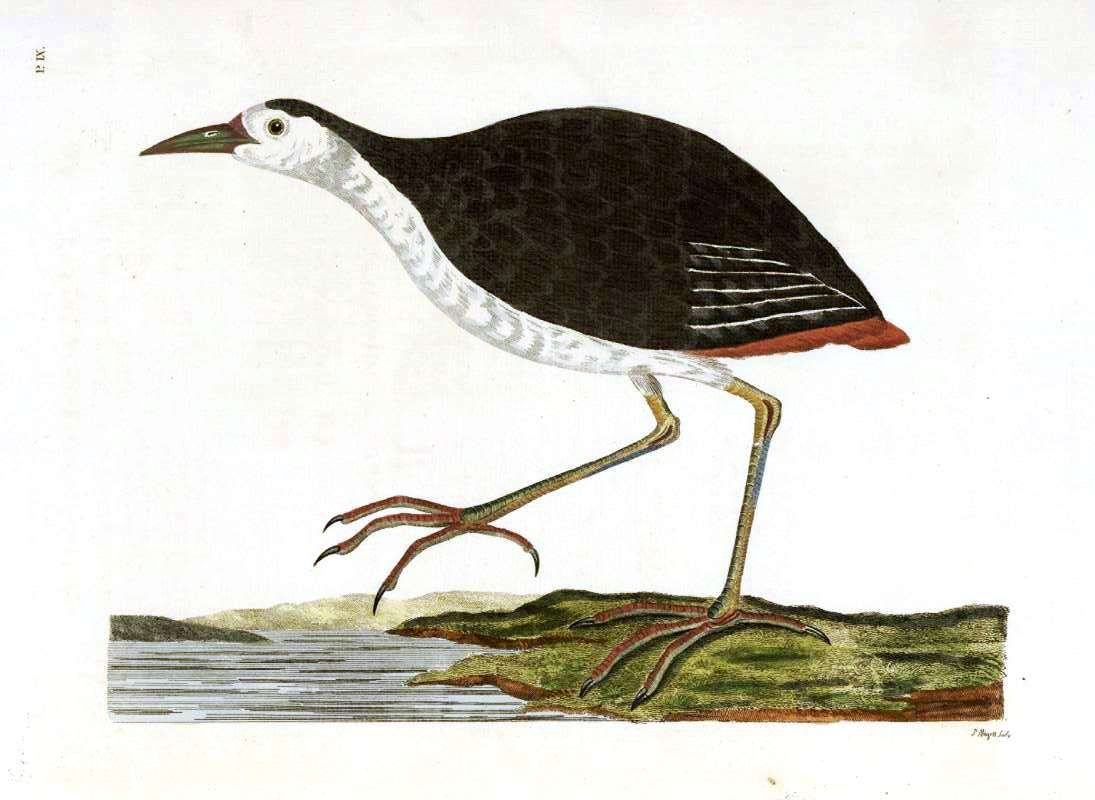 Animal - Indian Zoology - Bird - Seashore
