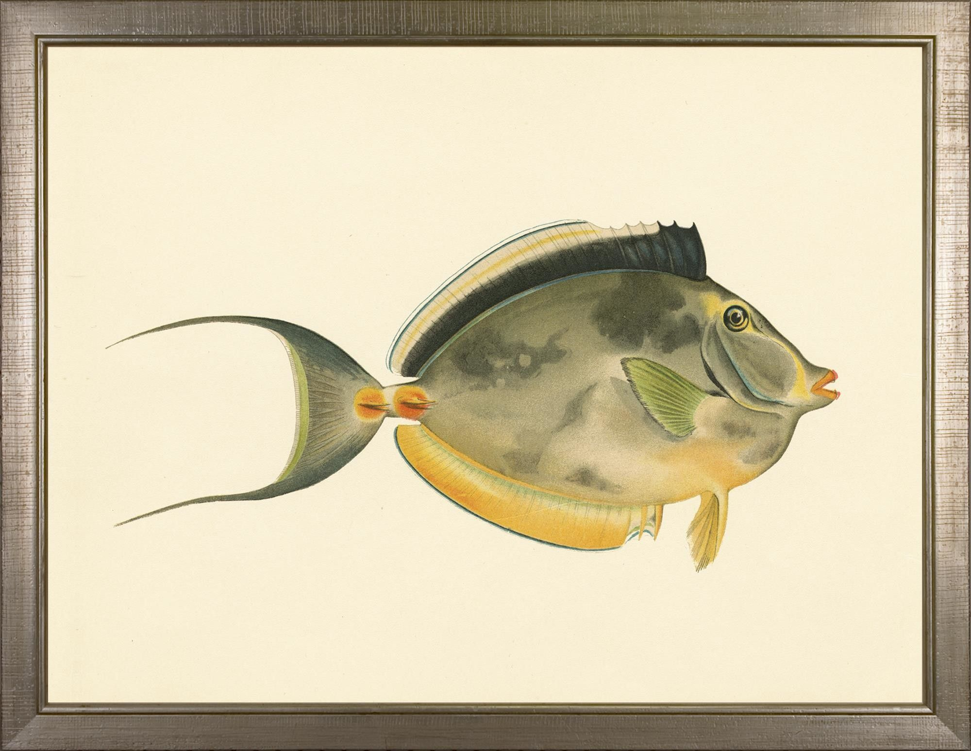 North American Fish Framed Painting Print | Products | Pinterest ...
