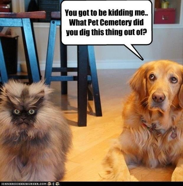 Forget The Dumb Speech Bubble Just Stare At That Cat Funny