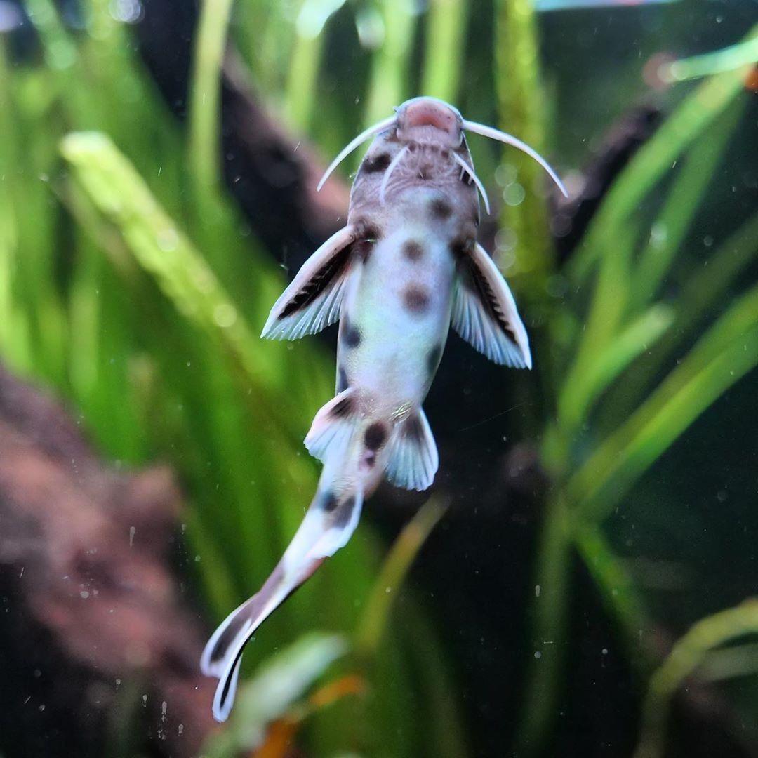 Pin On Aquariums Et Aquascapes Remplis D Eau Et De Poissons