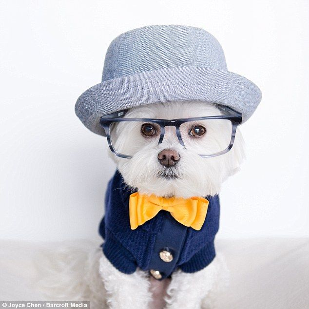 Joyce Chen has captured her ten-year-old Maltese terrier Toby wearing various hipster style outfits