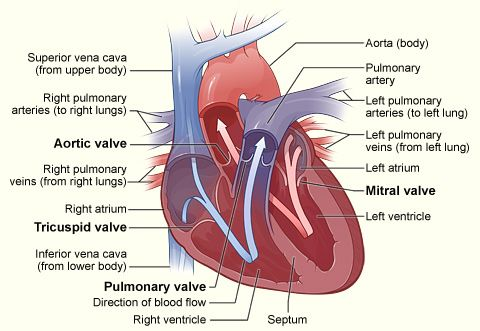 Aortic Valvuloplasty Aortic And Mitral Valvuloplasty Miami International Cardiology Heart Diagram Human Heart Diagram Heart Care