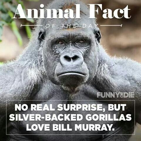 Animal Fact Of The Day.