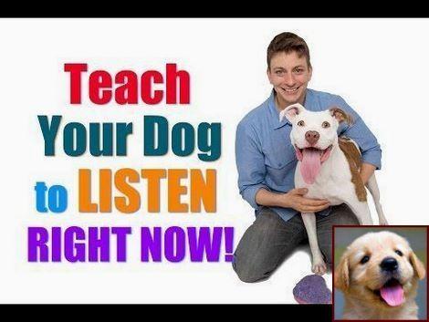 Pin by Jacquelene Rowlette on Dog Info Dog training