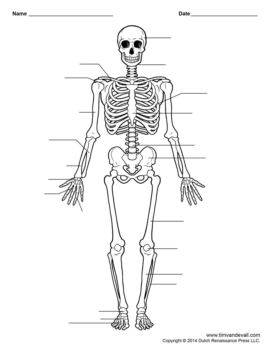 free printable human skeleton worksheet for students and teachers - Skeleton Worksheet