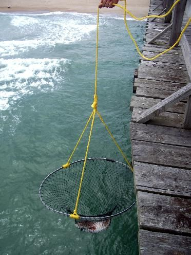 36 collapsible pier net hunting pinterest surf for Pier fishing rigs saltwater