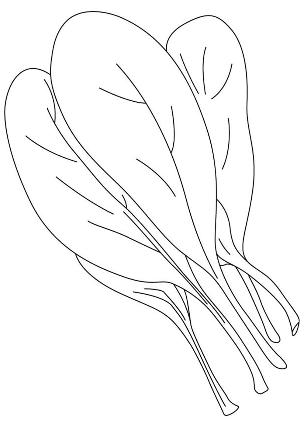 spinach leaf vegetable coloring pages pinterest spinach