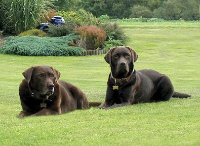 Dog Friendly Luxury Hotels In Devon Our Favourite Dog Friendly