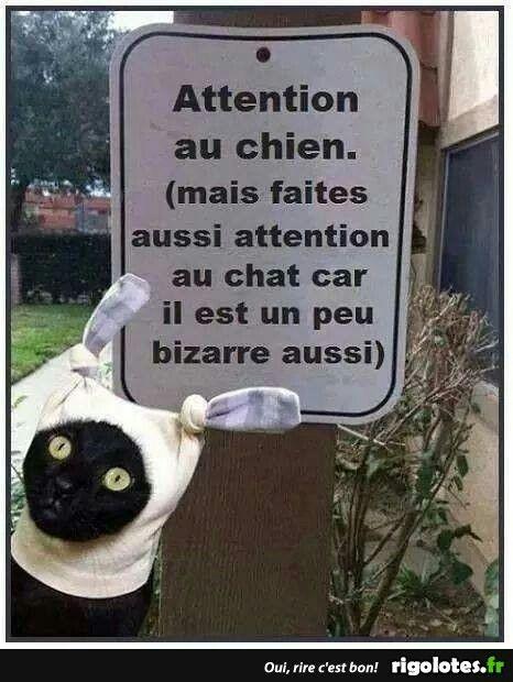 Attention au chien (Mais faite aussi attention au chat...)