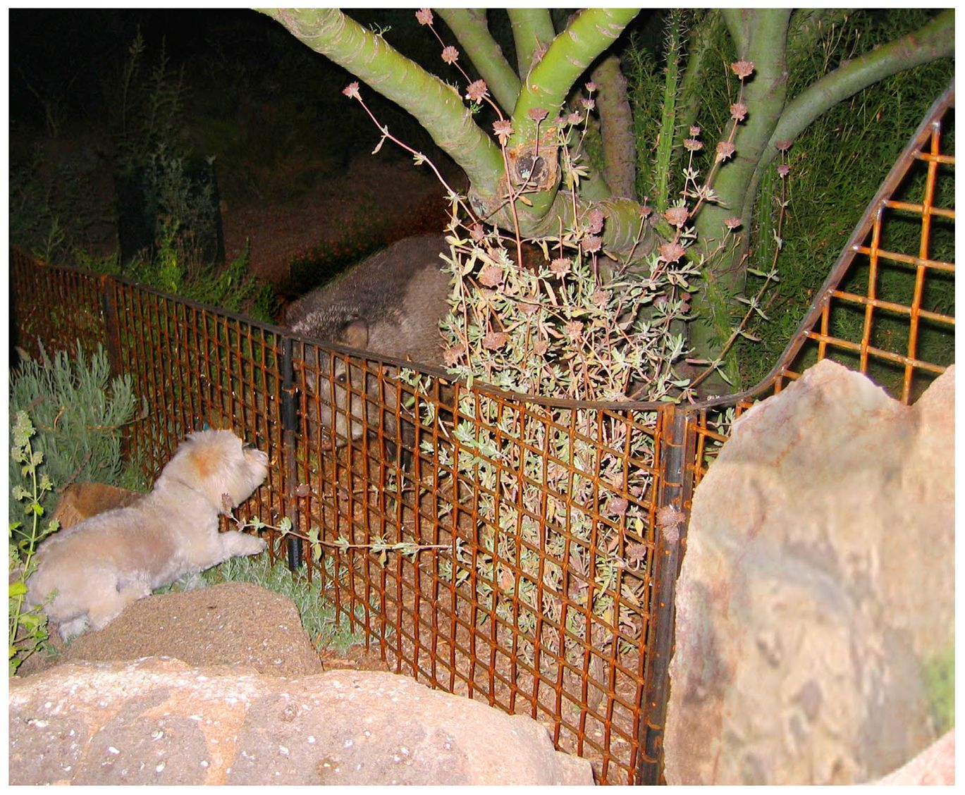 how do you keep a javelina out of your yard mcnichols wire mesh