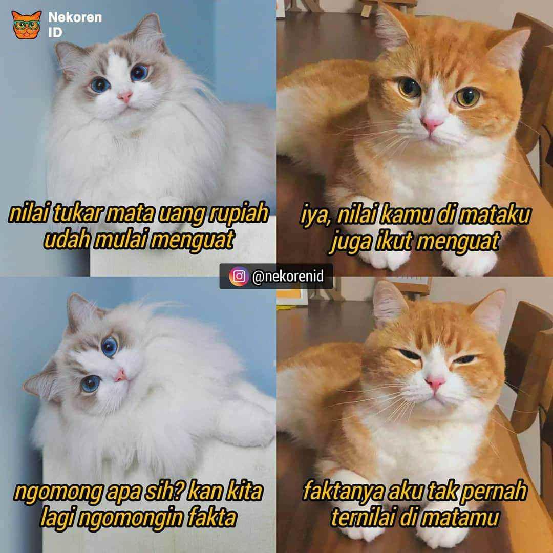 Nyesek 10 Meme Kucing Oren Ala Sadboy Ini Kocak Sekaligus Kasihan Meme Kucing Kucing Meme