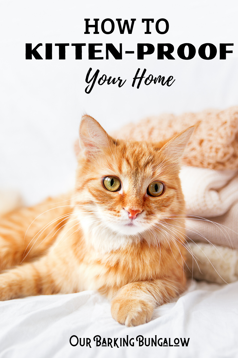 How To Kitten Proof Your Home Our Barking Bungalow In 2020 Kitten Proofing Sleeping Kitten Cat Proofing